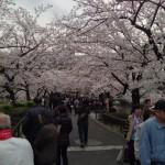 桜が満開だったので、上野公園にお花見に行ってきました。