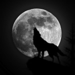 kindleで人狼小説「8人の人狼」を書いてみました!