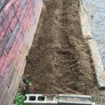 芋掘りイベント@保育園の花壇に行ってきました。