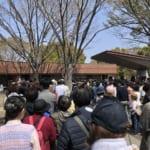 立川の昭和記念公園で花見